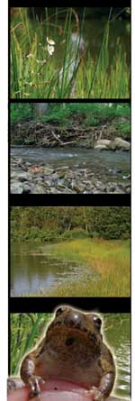 Slide strip showing aquatic scenes